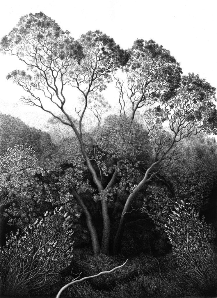 Berkeley Madrone Grove Lithograph