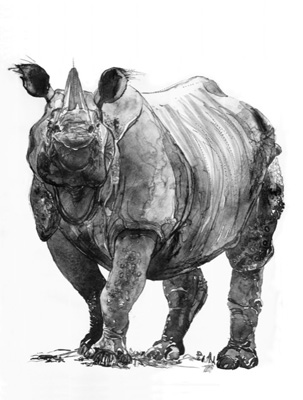 Caroline Thorington, Rhinoceros III, 2019