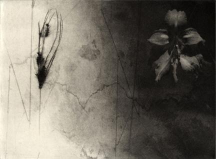 Freestone, Jenny, Grass # 2, Photogravure, 2009, 6.5 x 8.5 in. Edition of 20. http://www.jennyfreestone.com