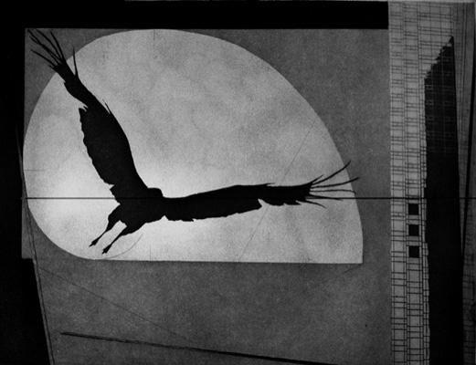 Jenny Freestone, Flight. 2010. Photogravure, Etching