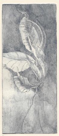 Parker, Margaret Adams, Elegy, etching, 2013, 8 x 3.5 in